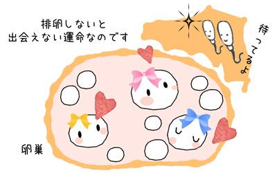 多嚢胞性卵巣について